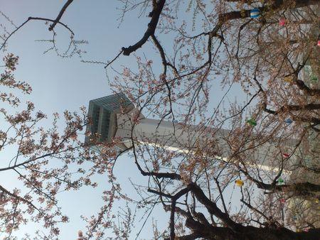 五稜郭公園から桜とタワー_b0106766_236979.jpg