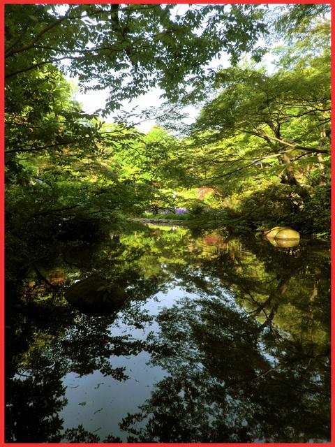 根津さまの、今日の庭。_e0236072_22473798.jpg