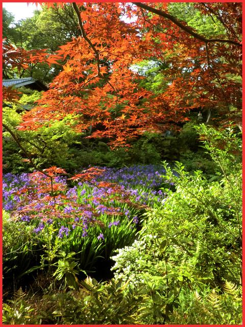 根津さまの、今日の庭。_e0236072_2248855.jpg