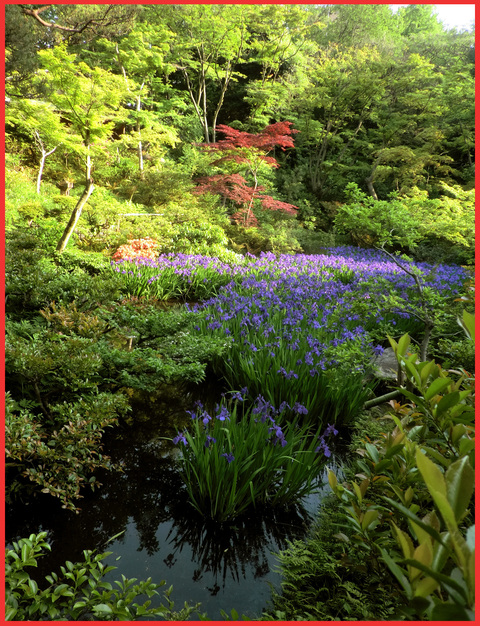 根津さまの、今日の庭。_e0236072_22494890.jpg