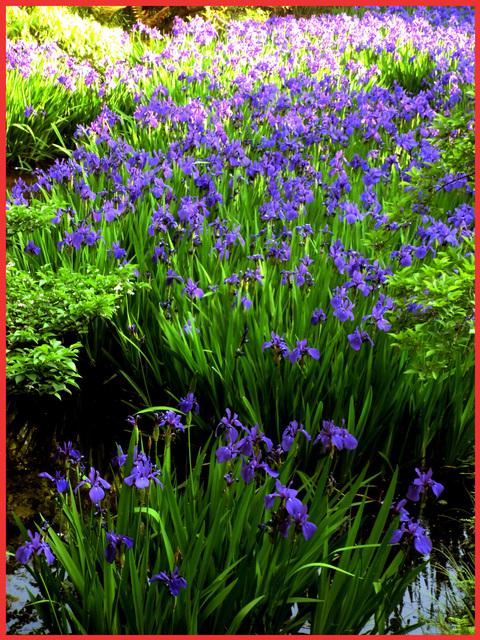 根津さまの、今日の庭。_e0236072_2251550.jpg