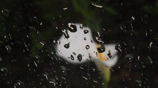 雨を撮ってみました_b0214473_9353931.jpg