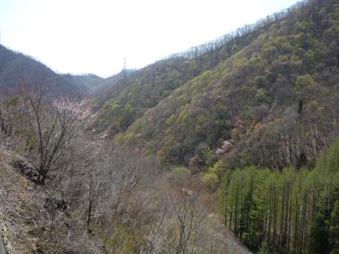 中山峠の新緑の最初_f0227395_15253674.jpg