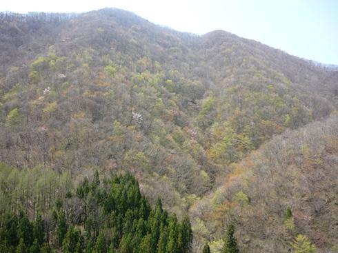 中山峠の新緑の最初_f0227395_15255510.jpg