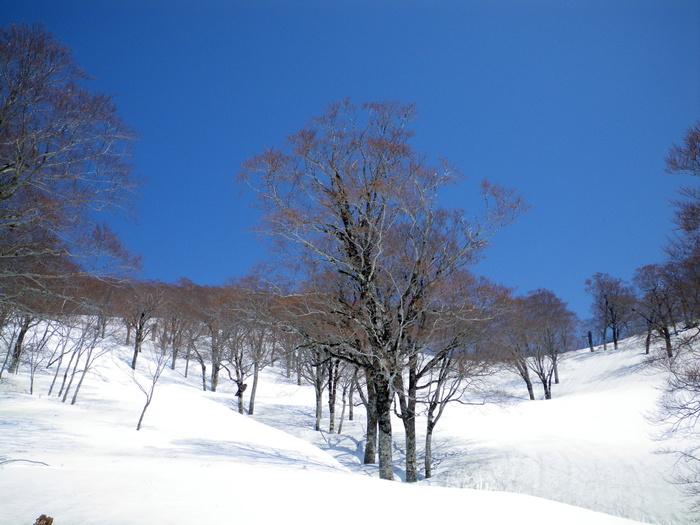 飯豊山 本社ノ沢左俣を滑降 ~ 2013年5月9日_f0170180_4354411.jpg