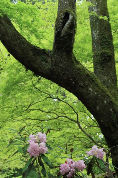 新緑の大和路へ_a0157091_1741018.jpg