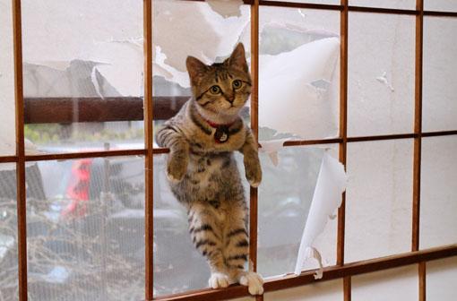 我が家のおてんば子猫「みかん」_e0054299_1003588.jpg