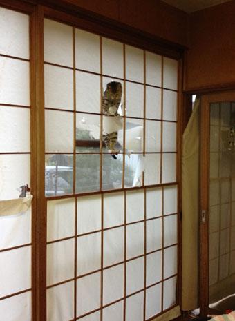 我が家のおてんば子猫「みかん」_e0054299_1004727.jpg