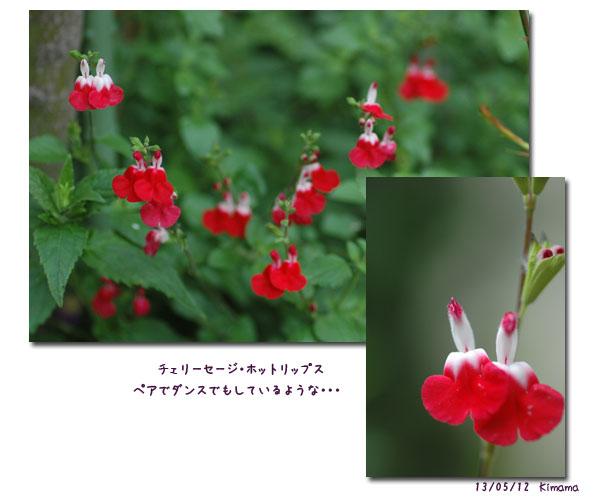 母の日_c0051105_03363.jpg