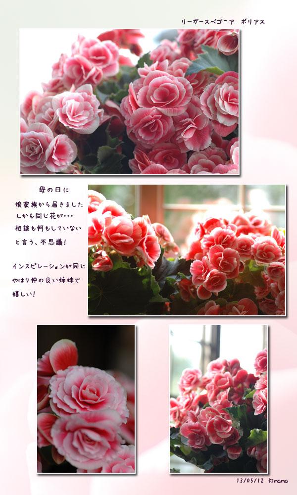 母の日_c0051105_2333951.jpg