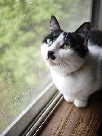 猫のお友だち ハナちゃんエムくんライオンちゃんモコちゃんガクくんハルちゃんダイヤちゃんクリちゃん編。_a0143140_0515163.jpg
