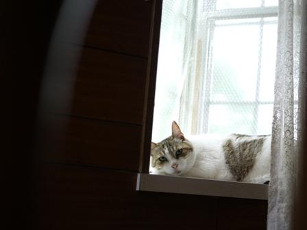 猫のお友だち ハナちゃんエムくんライオンちゃんモコちゃんガクくんハルちゃんダイヤちゃんクリちゃん編。_a0143140_0582183.jpg
