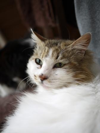 猫のお友だち ハナちゃんエムくんライオンちゃんモコちゃんガクくんハルちゃんダイヤちゃんクリちゃん編。_a0143140_0591813.jpg