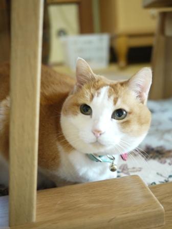 猫のお友だち ふくちゃん編。_a0143140_1122130.jpg