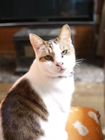 猫のお友だち ハナちゃんエムくんライオンちゃんモコちゃんガクくんハルちゃんダイヤちゃんクリちゃん編。_a0143140_123065.jpg