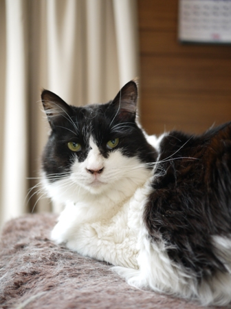 猫のお友だち ハナちゃんエムくんライオンちゃんモコちゃんガクくんハルちゃんダイヤちゃんクリちゃん編。_a0143140_132331.jpg