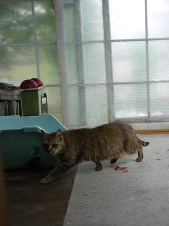 猫のお友だち ハナちゃんエムくんライオンちゃんモコちゃんガクくんハルちゃんダイヤちゃんクリちゃん編。_a0143140_15319.jpg