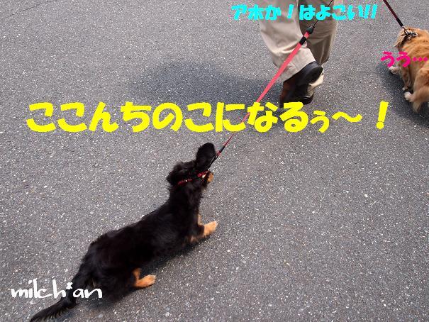 b0115642_20501336.jpg
