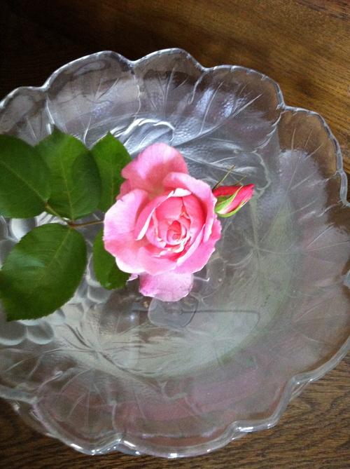 バラが咲きました_c0185356_2182585.jpg