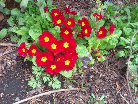 春を見つけた_b0106766_23224165.jpg