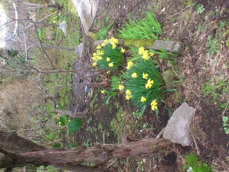 春を見つけた_b0106766_23224220.jpg