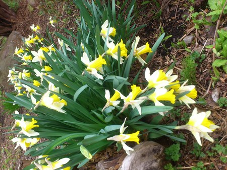 春を見つけた_b0106766_23224268.jpg