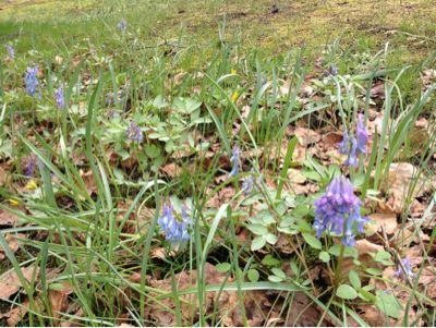 Spring flowers_e0014773_122050100.jpg