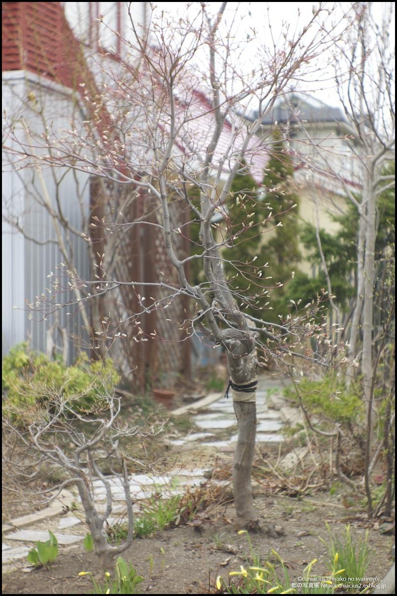 木々の芽吹き_f0042194_7563644.jpg