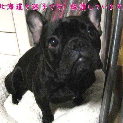 拡散希望!迷子犬!_c0226202_2132418.jpg