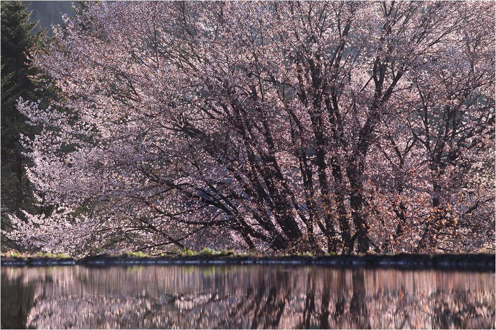 桜 フィナーレ_e0031502_17375417.jpg