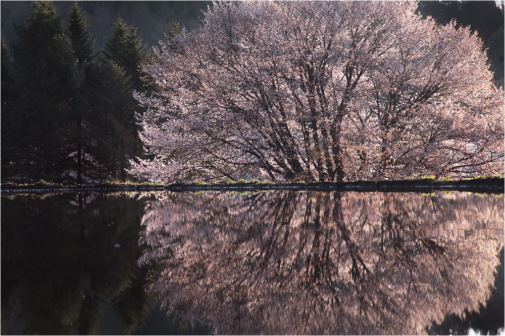 桜 フィナーレ_e0031502_17382870.jpg