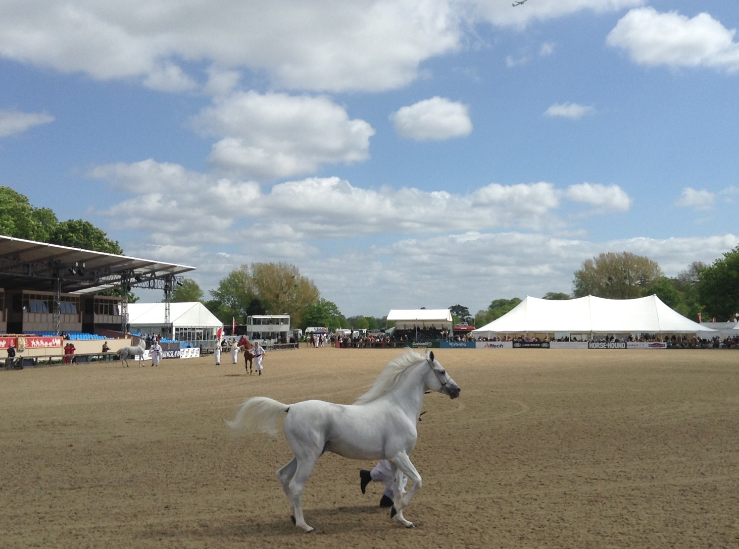 Fun at Royal Windsor Horse Show_c0060412_031158.jpg