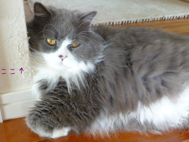 猫のいる しるし_e0237625_12235648.jpg