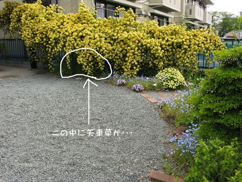 f0129726_2213673.jpg