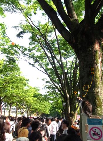 タイフェスティバル2013・2日目_d0156336_1382687.jpg