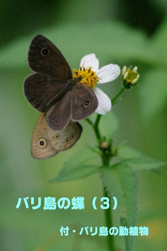 b0144049_15185613.jpg