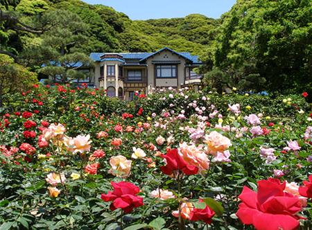 本日定休日 お花の季節。_a0145471_1020773.jpg