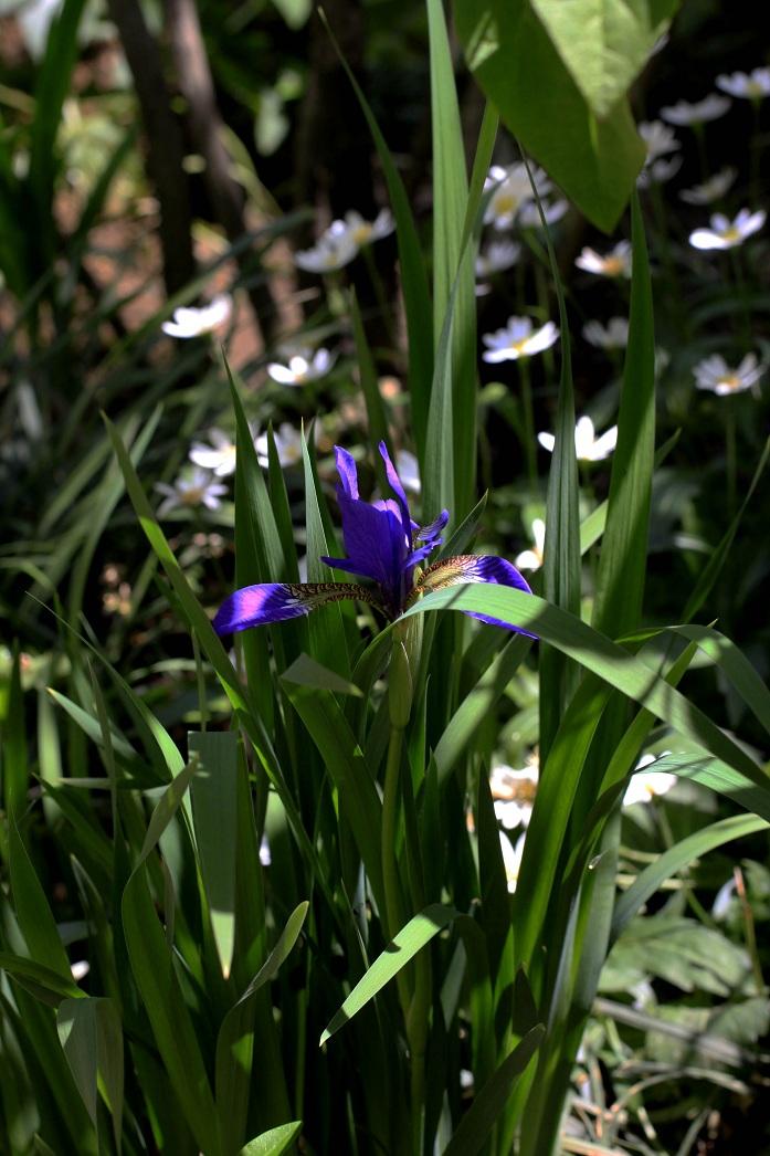 木陰では青い花が。。。_a0107574_18284498.jpg