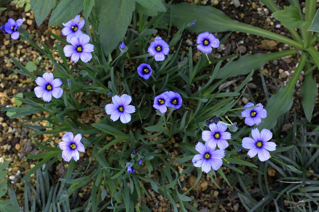 木陰では青い花が。。。_a0107574_18302641.jpg