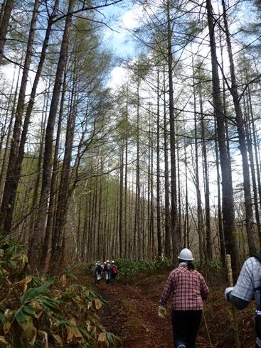 きこりの森ハイキング一回目に行ってきました。_f0227395_151268.jpg