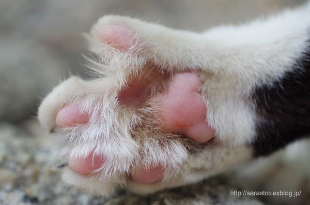 のら猫_e0028416_15415137.jpg