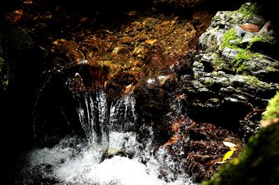 五十鈴川、源流の夏!大樹、針葉樹。照葉樹などなど。_b0169522_7491312.jpg