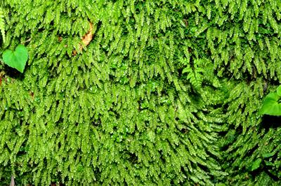 五十鈴川、源流の夏!大樹、針葉樹。照葉樹などなど。_b0169522_7504188.jpg