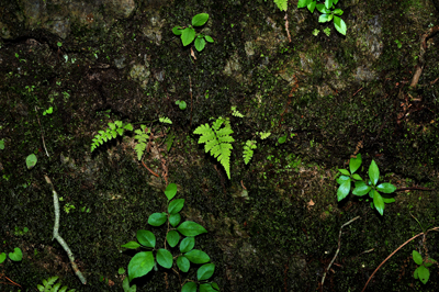五十鈴川、源流の夏!大樹、針葉樹。照葉樹などなど。_b0169522_7505742.jpg