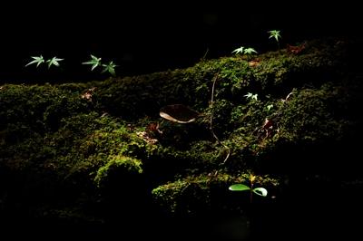 五十鈴川、源流の夏!大樹、針葉樹。照葉樹などなど。_b0169522_7552311.jpg