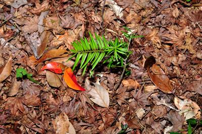五十鈴川、源流の夏!大樹、針葉樹。照葉樹などなど。_b0169522_7555699.jpg