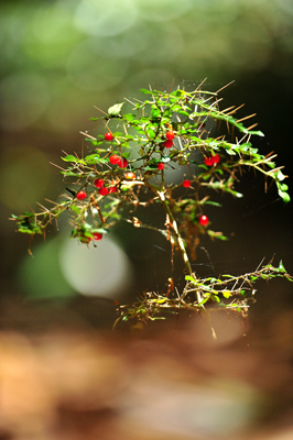五十鈴川、源流の夏!大樹、針葉樹。照葉樹などなど。_b0169522_80439.jpg