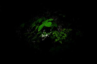 五十鈴川、源流の夏!大樹、針葉樹。照葉樹などなど。_b0169522_811784.jpg