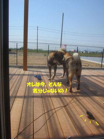 f0143123_20331111.jpg