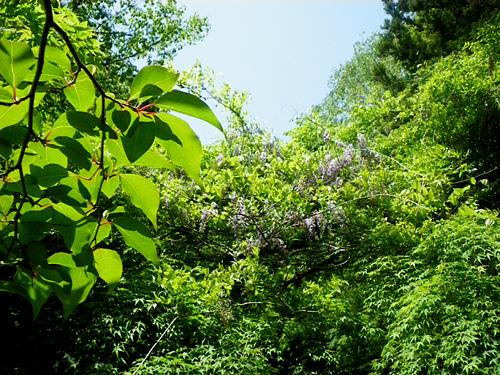 新緑に囲まれて_c0120834_18422012.jpg